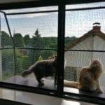 Katzennetz als Fensterschutz
